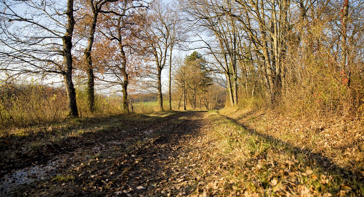 Trail des Poilus – informations et conseils